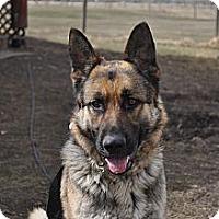 Adopt A Pet :: Gibbs - Hamilton, MT