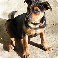 Adopt A Pet :: Ellie Mae - Normandy, TN