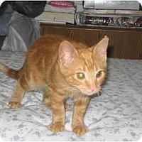 Adopt A Pet :: ZeZe - Warminster, PA