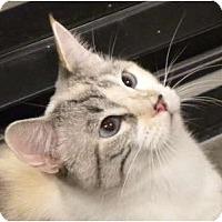 Adopt A Pet :: Ivanna - Encinitas, CA
