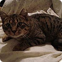 Adopt A Pet :: Trixie - Raritan, NJ