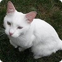 Adopt A Pet :: Casper - Plainview, NY