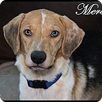Adopt A Pet :: Mercedes - Rockwall, TX