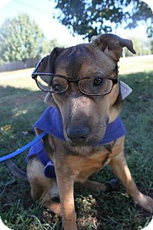 Shepherd (Unknown Type) Mix Dog for adoption in Christiana, Tennessee - Munchkin
