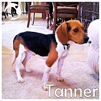 Adopt A Pet :: Tanner - Novi, MI