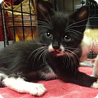 Adopt A Pet :: Dempsey - East Brunswick, NJ