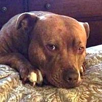 Adopt A Pet :: Max- Courtesy Listing - Fredericksburg, VA