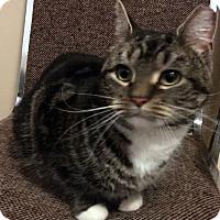 Adopt A Pet :: Diva - Staten Island, NY