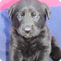 Adopt A Pet :: Gia - Waldorf, MD