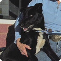 Adopt A Pet :: Casper - Elmwood Park, NJ