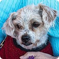 Adopt A Pet :: Holly - San Marcos, CA