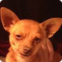 Adopt A Pet :: Avery - MINNEAPOLIS, KS
