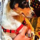Adopt A Pet :: Aleria