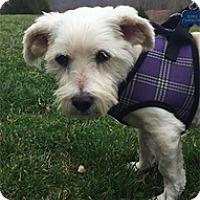 Adopt A Pet :: Wrangler - Seymour, CT