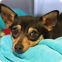 Adopt A Pet :: OLIVIA - Kyle, TX
