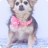 Adopt A Pet :: Pixie - Loomis, CA