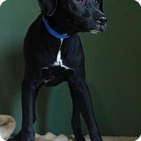 Adopt A Pet :: Adrien - Waldorf, MD