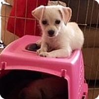 Adopt A Pet :: Pistachio - Pleasanton, CA