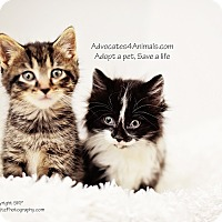 Adopt A Pet :: Shadow - Xenia, OH