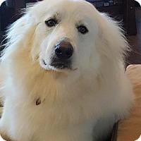 Adopt A Pet :: Prim - Garland, TX