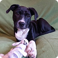 Adopt A Pet :: Cal - Snow Hill, NC
