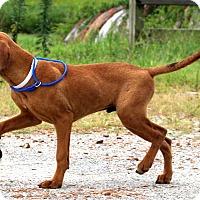 Adopt A Pet :: Larry~meet me! - Glastonbury, CT