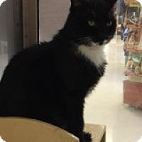 Adopt A Pet :: Gibson - Manchester, CT