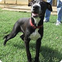 Adopt A Pet :: Sparkles - Bedford, TX