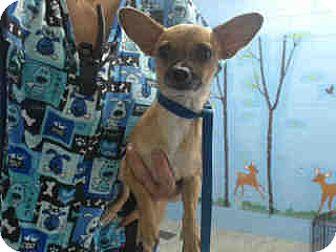 Chihuahua Dog for adoption in San Bernardino, California - URGENT ON 10/18 San Bernardino