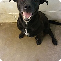 Labrador Retriever Mix Dog for adoption in Glenpool, Oklahoma - Logan