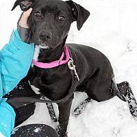 Adopt A Pet :: Bambi - Harrison, NY