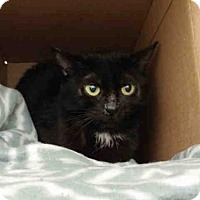 Adopt A Pet :: KENDRA - Pittsburgh, PA