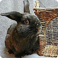 Adopt A Pet :: Trevor - Newport, DE
