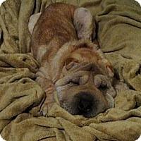 Adopt A Pet :: Hooch - Gainesville, FL