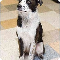 Adopt A Pet :: Mocha - Portland, OR