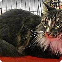 Adopt A Pet :: Rascal - Seminole, FL