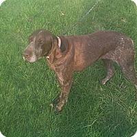 Adopt A Pet :: Berry - Streetsboro, OH