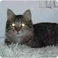 Adopt A Pet :: Angelo - Arlington, VA