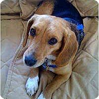 Adopt A Pet :: Frito - Novi, MI