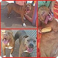 Adopt A Pet :: Binx - Scottsdale, AZ