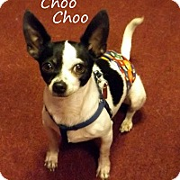 Adopt A Pet :: Choo Choo - Metairie, LA