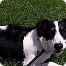 Adopt A Pet :: Violet (DELILAH'S VIOLET)