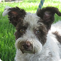 Adopt A Pet :: Benson - Turlock, CA