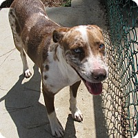 Adopt A Pet :: Betsy Ross - Charlemont, MA