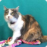 Adopt A Pet :: Turley - Colorado Springs, CO