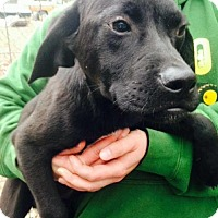 Adopt A Pet :: Danny--in NH! - Chichester, NH