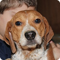 Adopt A Pet :: Cricket - Harmony, Glocester, RI