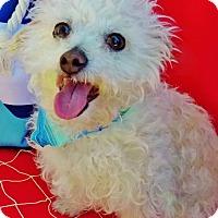 Adopt A Pet :: Alfie - Irvine, CA