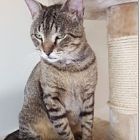 Adopt A Pet :: Noah - Hallandale, FL