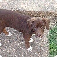 Adopt A Pet :: Brownie - Olive Branch, MS